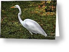 Ankle Deep Greeting Card