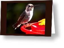 Anna's Hummingbird On Perch Greeting Card