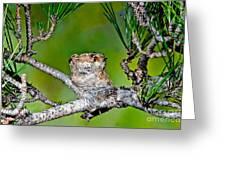 Annas Hummingbird Nest Greeting Card