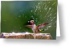 Anna's Hummingbird Taking A Shower Greeting Card