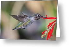 Anna's Hummingbird Greeting Card by Thy Bun