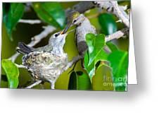 Annas Hummingbirds At Nest Greeting Card