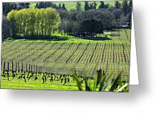 Anne Amie Vineyard Lines 23093 Greeting Card