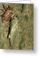 Annual Cicada Greeting Card