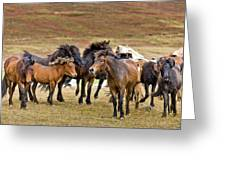 Annual Horse Round Up-laufskalarett Greeting Card
