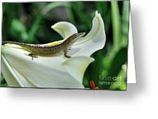 Anole On A White Lily Greeting Card