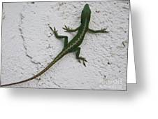 Anole On Stucco Greeting Card