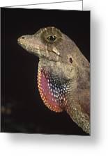 Anolis Lizard Portrait Peru Greeting Card