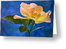 Another Beautiful Rose Greeting Card