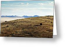 Another Color View Of West Texas Greeting Card
