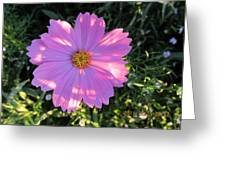 Another New And Bigger Pink Greeting Card