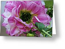 Another Point Of View Greeting Card