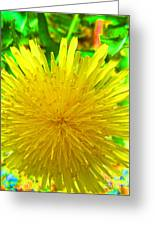 Another Variety Dandelion Greeting Card