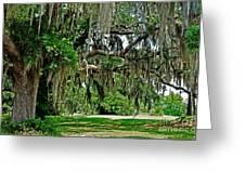 Savannah National Wildlife Refuge Greeting Card