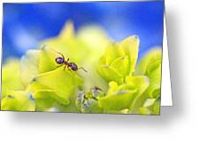 Ant And Hydrandea Greeting Card