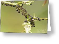 Ant Farm Greeting Card