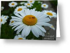 Ant Nothing Sweeter Than My Little Daisy Greeting Card