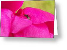 Ant On Pink Greeting Card
