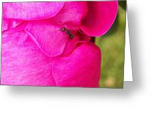 Ant On Pink Petals Greeting Card