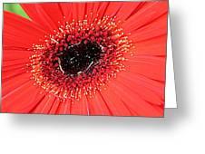 Ant That A Daisy Greeting Card by Sarah E Kohara
