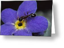Ant With Pollen Enters Alpine Greeting Card