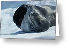 Antarctic Leopard Seal On Iceberg Greeting Card