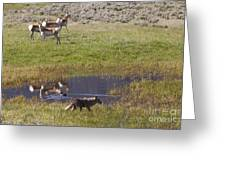 Antelope   Duck   And Coyote Greeting Card
