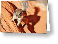 Antelope Ground Squirrel Greeting Card