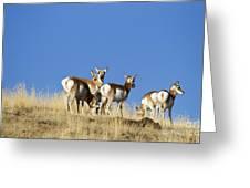 Antelope Herd   #0296 Greeting Card