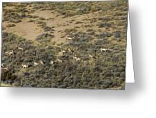 Antelope Herd Panorama  Signed   20x80 Greeting Card