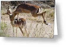 Antelope Leap  Greeting Card