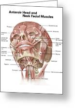 Anterior Neck And Facial Muscles Greeting Card