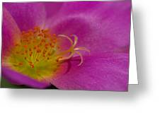 Anthers And Stamens Greeting Card