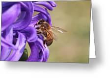 Anticipating The Nectar Greeting Card