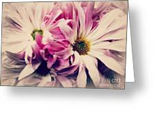 Antique Pink And White Daisies Greeting Card