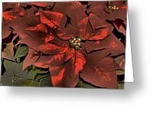 Antiqued Poinsettia Greeting Card