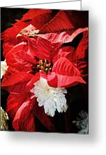 Antiqued Poinsettia Greeting Card