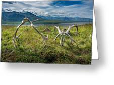 Antlers On The Hill Greeting Card