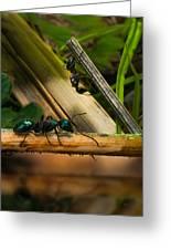Ants Adventure 2 Greeting Card