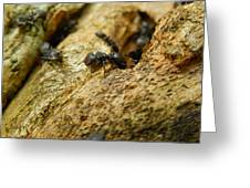 Ants On Wood Greeting Card