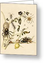 Ants Spiders Tarantula And Hummingbird Greeting Card
