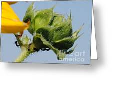 Ants Sunflower Greeting Card