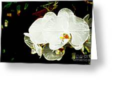 Aos White Orchid 1 Greeting Card