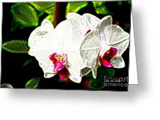 Aos White Orchid 2 Greeting Card