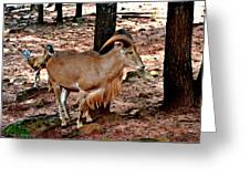 Aoudad Plus 2 Greeting Card