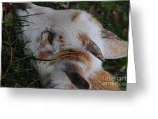 Apaca Baby2 Greeting Card