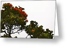 Apapane Atop An Orange Ohia Lehua Tree  Greeting Card