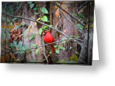 Appalachian Cardinal Greeting Card