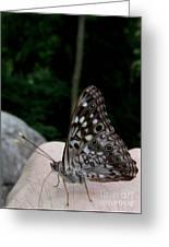 Appalachian Empress Greeting Card