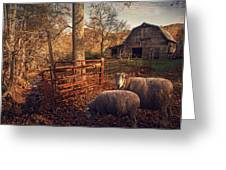 Appalachian Sheep Greeting Card by William Schmid